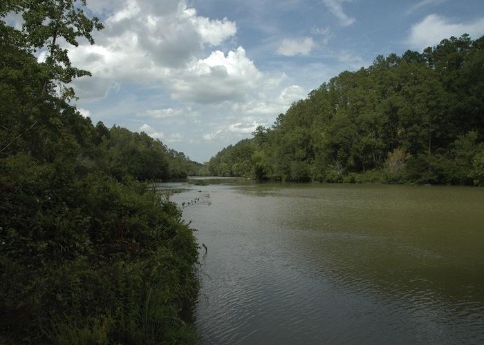 Image c/o the U.S. Fish and Wildlife Service Southeast Region