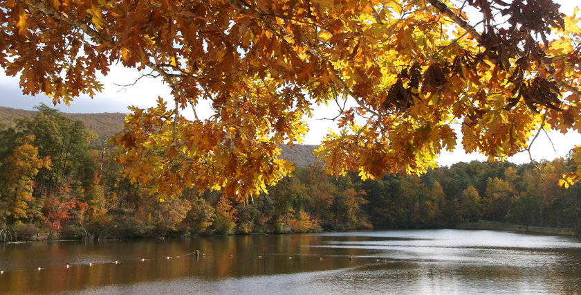 Parks for Patriots – Veterans to Receive Free Admission to AL State Parks
