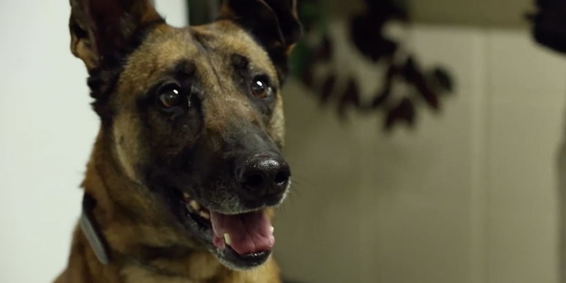 Military working dogs returning from service in the Middle East are in need of homes.