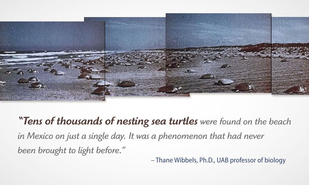 turtles-with-quote