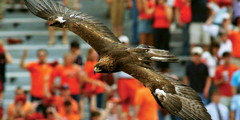 Nova takes flight (Photo: Auburn University)