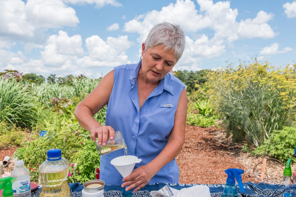 """Using the right ingredients -- natural, skin-loving oils that repel biting mosquitoes -- with soybean oil as a base, everyone can make their own safe, """"happy smelling"""" mosquito repellant, said Auburn University Horticulturist Tia Gonzales, shown at the university's Medicinal Plant Garden. (Photo by Nik Layman - Alabama NewsCenter)"""