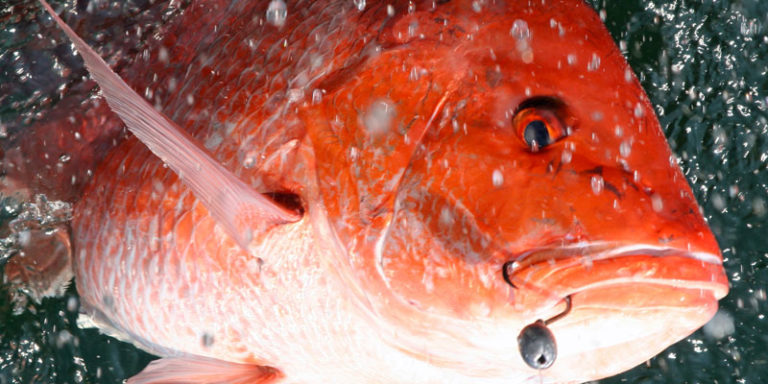 Alabama announces two additional days of red snapper season for private anglers