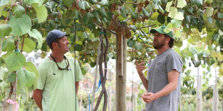 Could patented golden kiwifruit be Alabama's next export success?