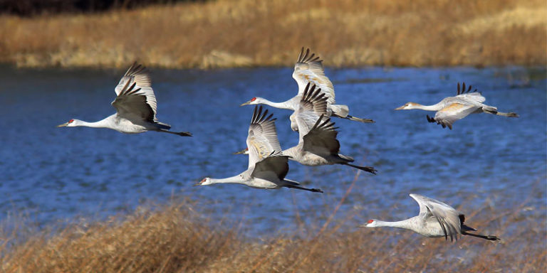 Alabama sandhill crane season returns for 2020-2021