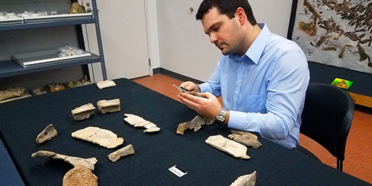 75-million-year-old sea turtle fossil in Alabama a key discovery