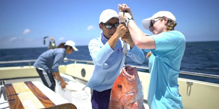 South Alabama launches School of Marine and Environmental Sciences
