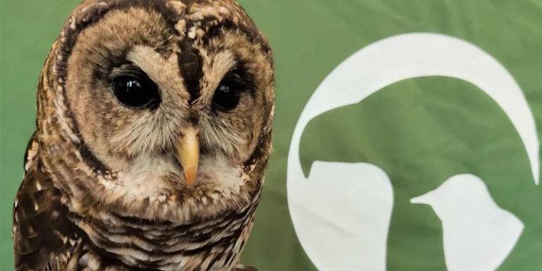 Alabama Wildlife Center celebrating Coosa the owl's 20th birthday on Saturday afternoon