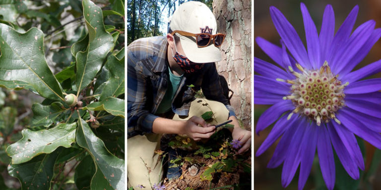 Two rare plant species discovered at Alabama's Oak Mountain State Park