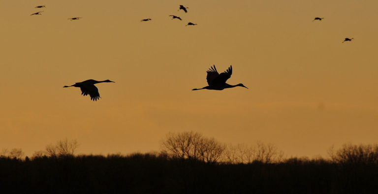 Sandhill crane season returns for 2021-2022