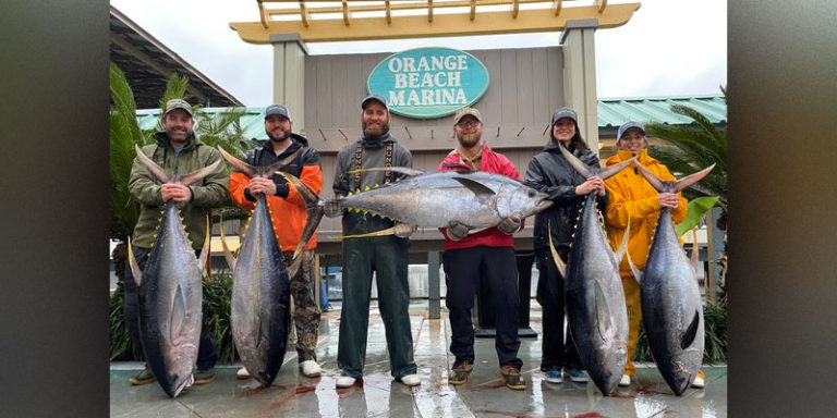 Why are there seasons and catch limits for Alabama fish?